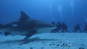 Scuba Diving With Deadly Animals Is Scary and Exciting