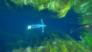 Freediving Crystal Clear Sinkholes