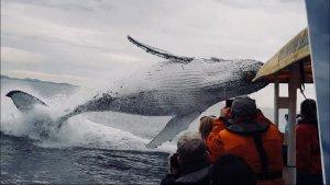 When Breaching Whales Jump…
